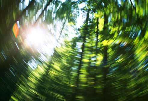 corbis_rf_photo_of_swirling_trees_jpg