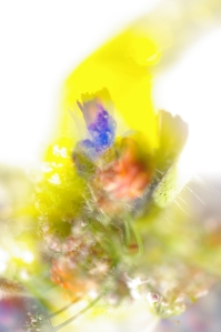 Iwian flowers abstract